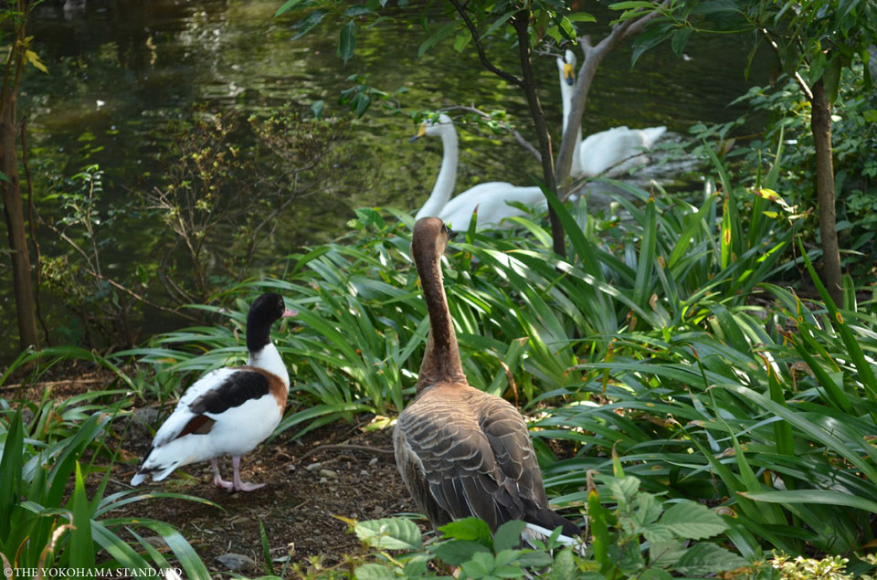 【Animals】野毛山動物園 大池の鳥たち THE YOKOHAMA STANDARD