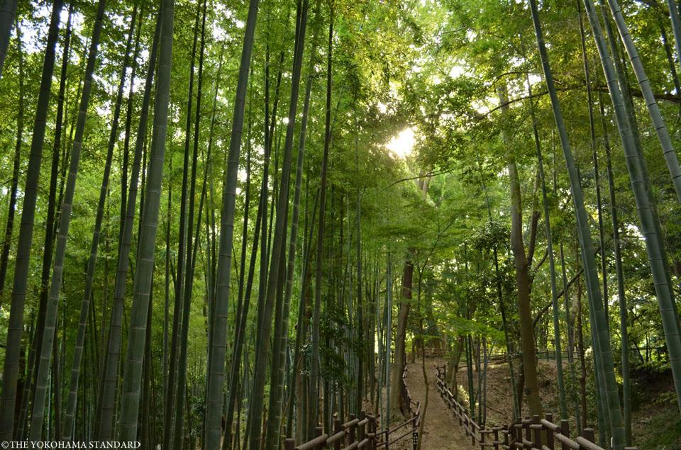 kodukuejousisiminnomori-the yokohama standard