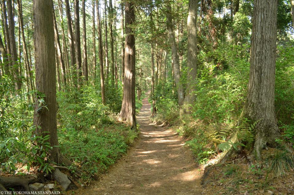 2017追分市民の森2-THE YOKOHAMA STANDARD