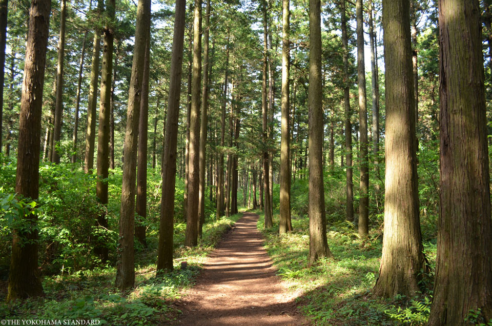 2017追分市民の森15-THE YOKOHAMA STANDARD
