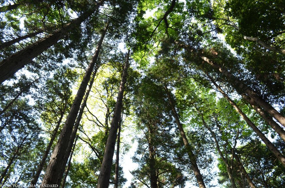2017追分市民の森3-THE YOKOHAMA STANDARD