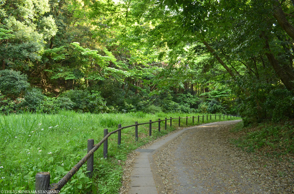 2017追分市民の森41-THE YOKOHAMA STANDARD
