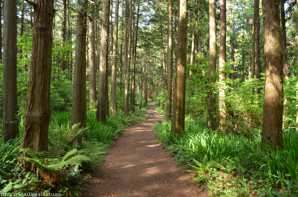 2017追分市民の森5-THE YOKOHAMA STANDARD