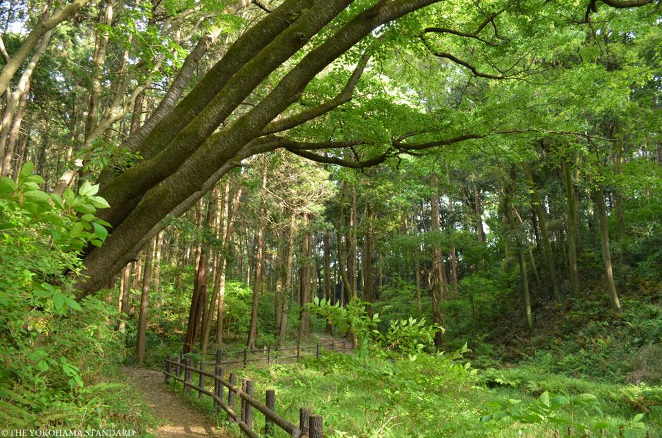 2017追分市民の森33-THE YOKOHAMA STANDARD