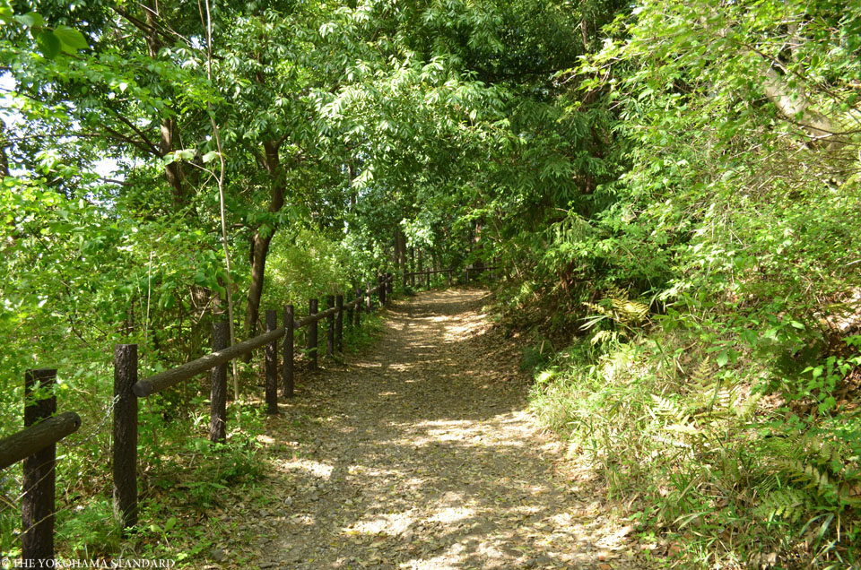 2017追分市民の森1-THE YOKOHAMA STANDARD