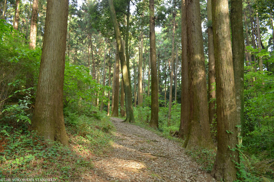 2017追分市民の森35-THE YOKOHAMA STANDARD