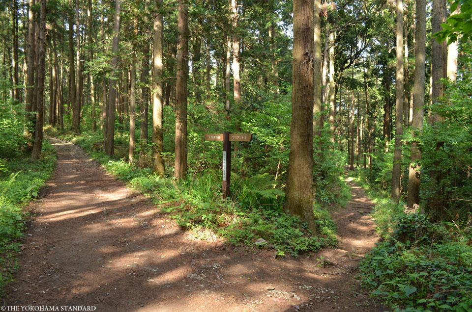 2017追分市民の森6-THE YOKOHAMA STANDARD