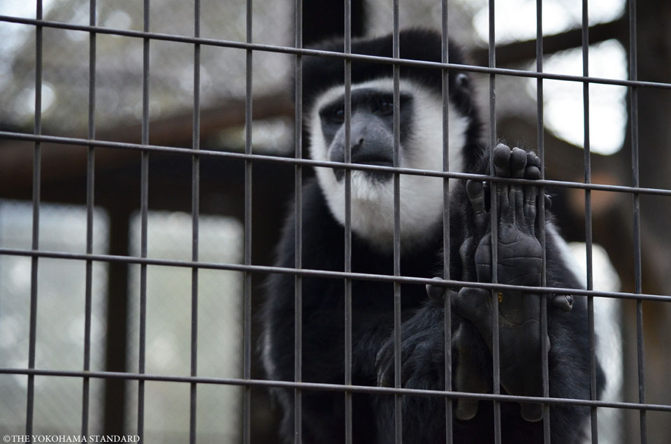 野毛山動物園の動物たち3-THE YOKOHAMA STANDARD