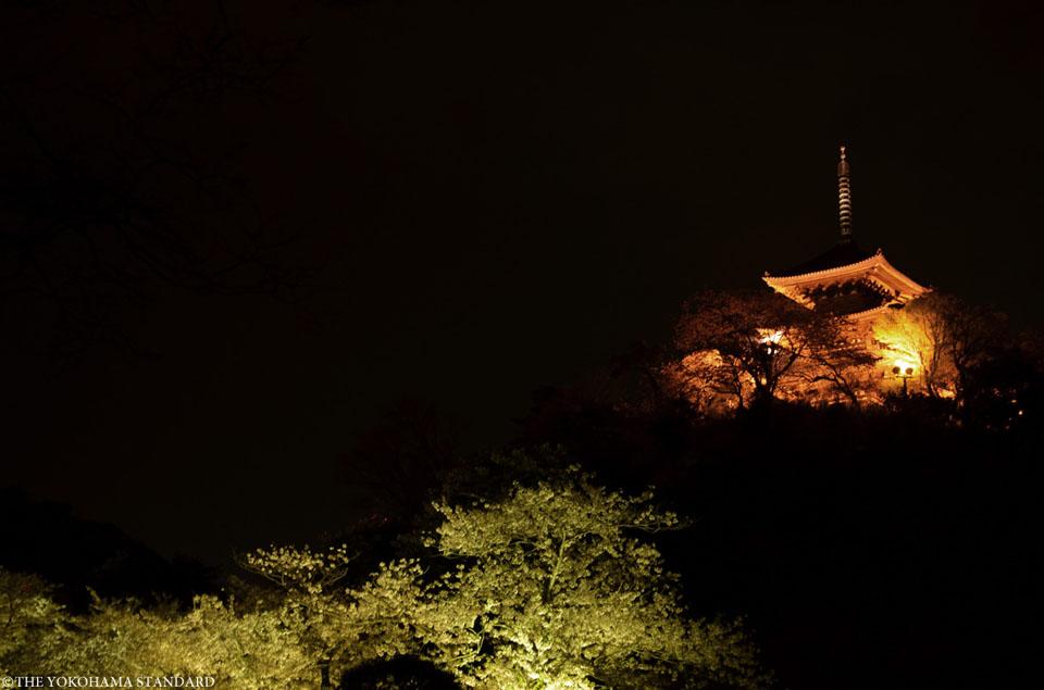 三溪園の夜桜2-THE YOKOHAMA STANDARD