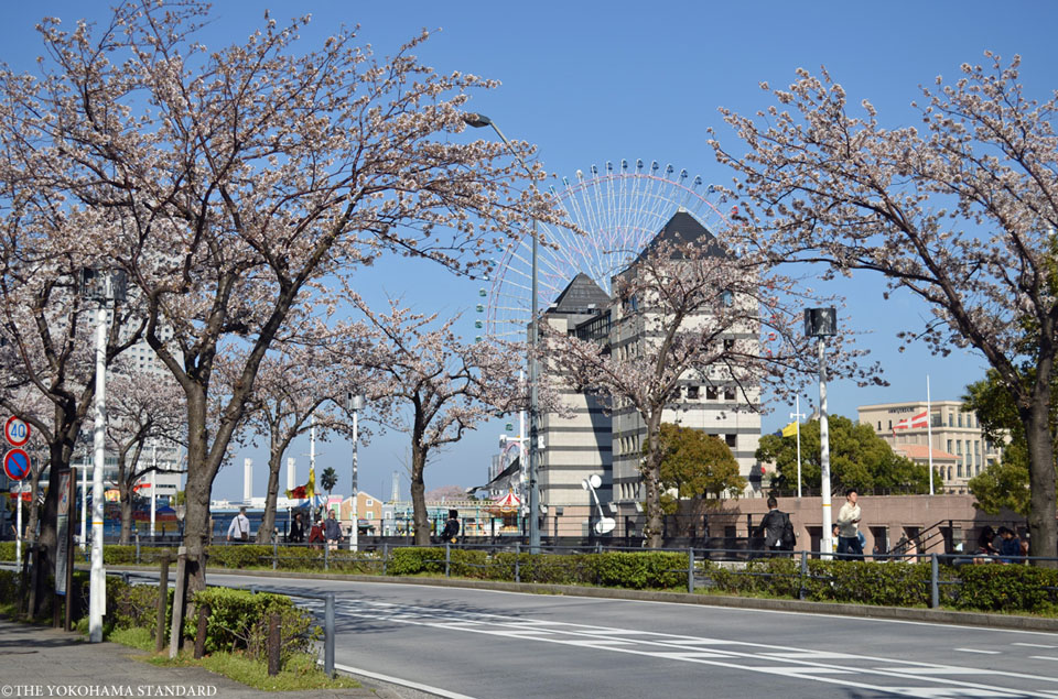 さくら通りの桜-THE YOKOHAMA STANDARD