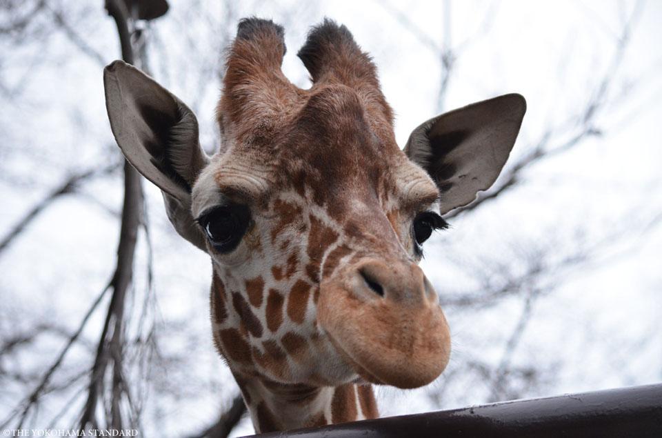 野毛山動物園の動物たち2-THE YOKOHAMA STANDARD
