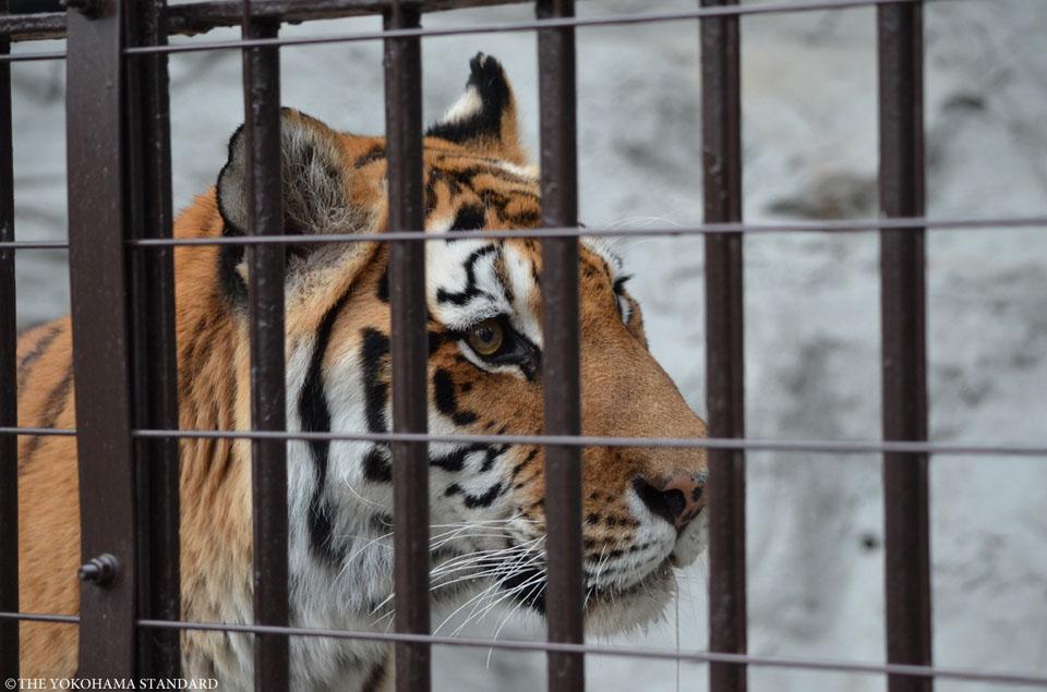 野毛山動物園の動物たち5-THE YOKOHAMA STANDARD