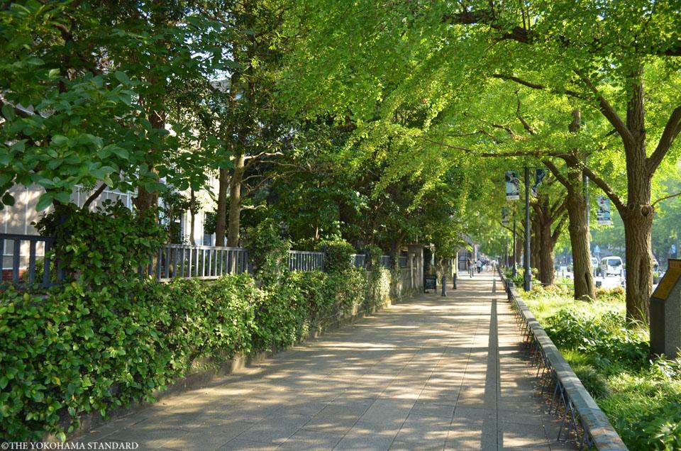 午後の日本大通り-THE YOKOHAMA STANDARD