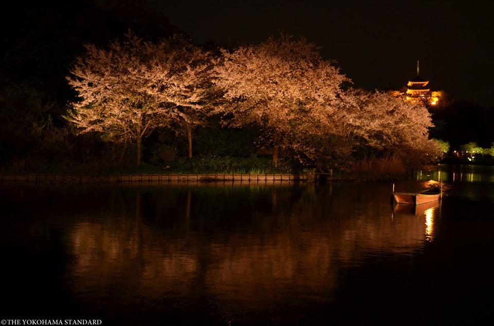 三溪園の夜桜1-THE YOKOHAMA STANDARD
