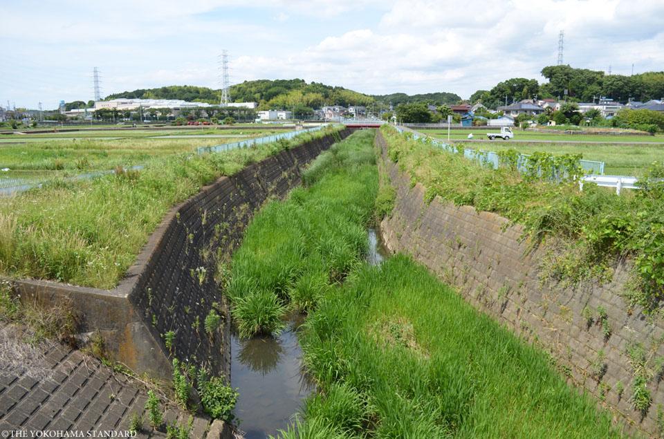 恩田川と奈良川1-THE YOKOHAMA STANDARD