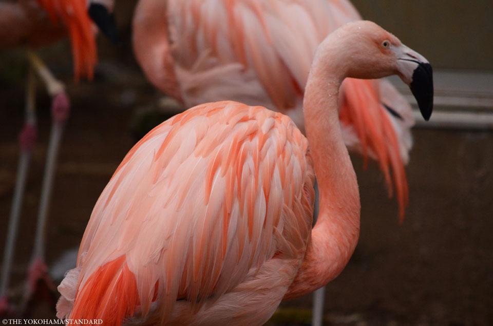 野毛山動物園の動物たち1-THE YOKOHAMA STANDARD