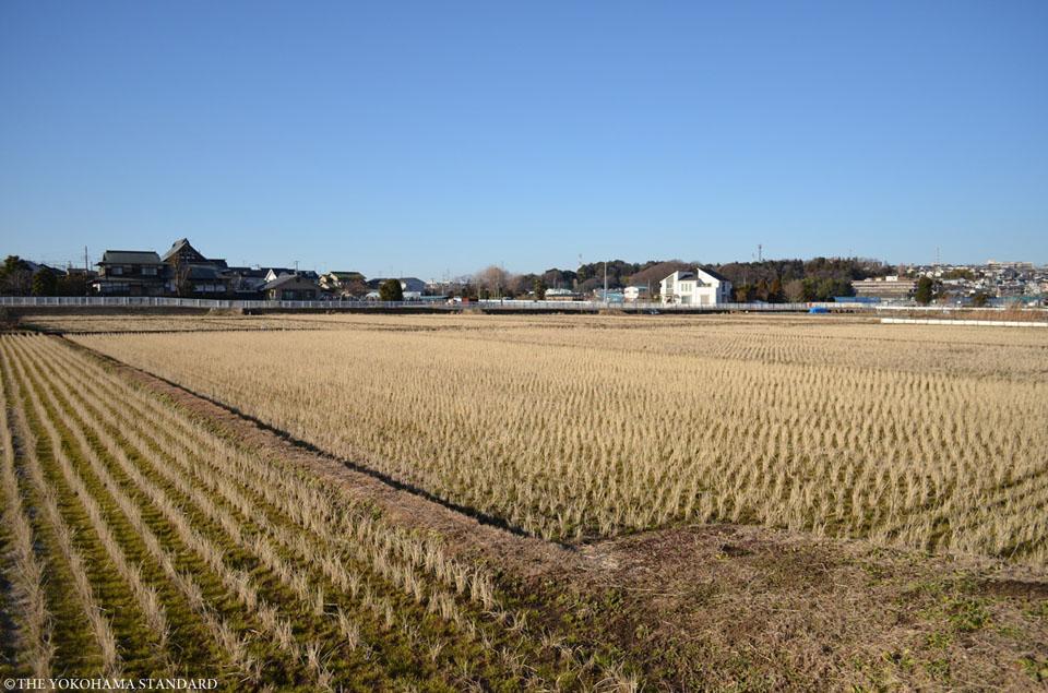 冬の田園風景2-THE YOKOHAMA STANDARD