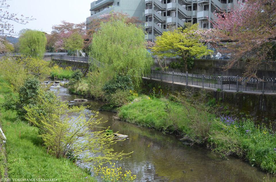 いたち川12-THE YOKOHAMA STANDARD