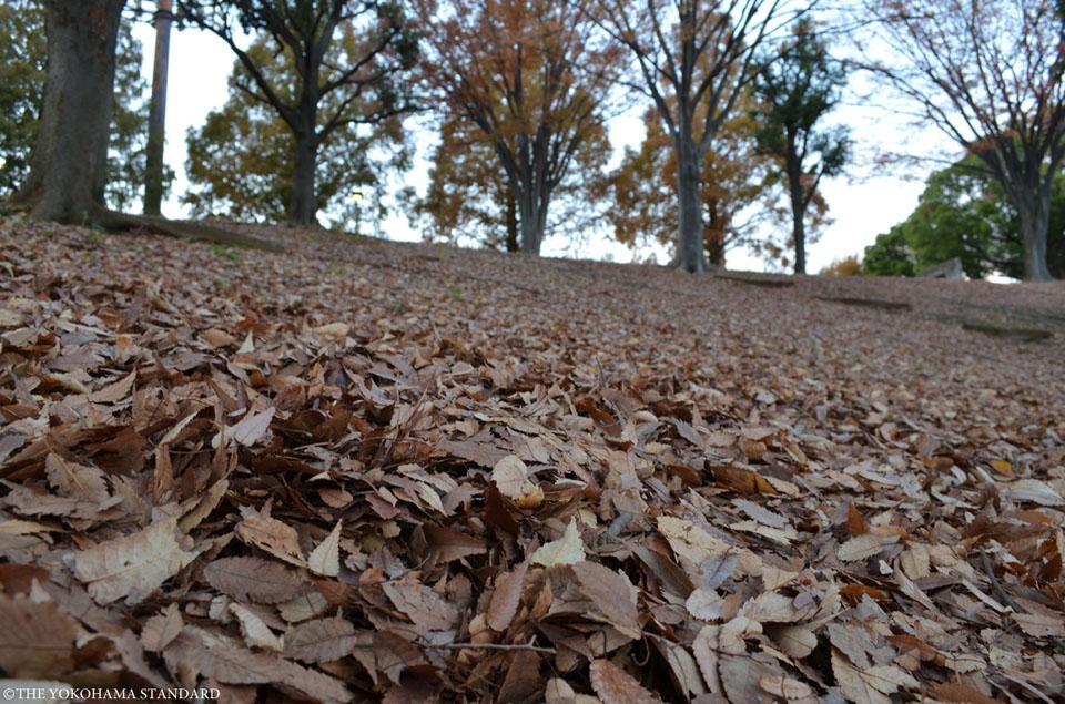 秋の清水ヶ丘公園2-THE YOKOHAMA STANDARD