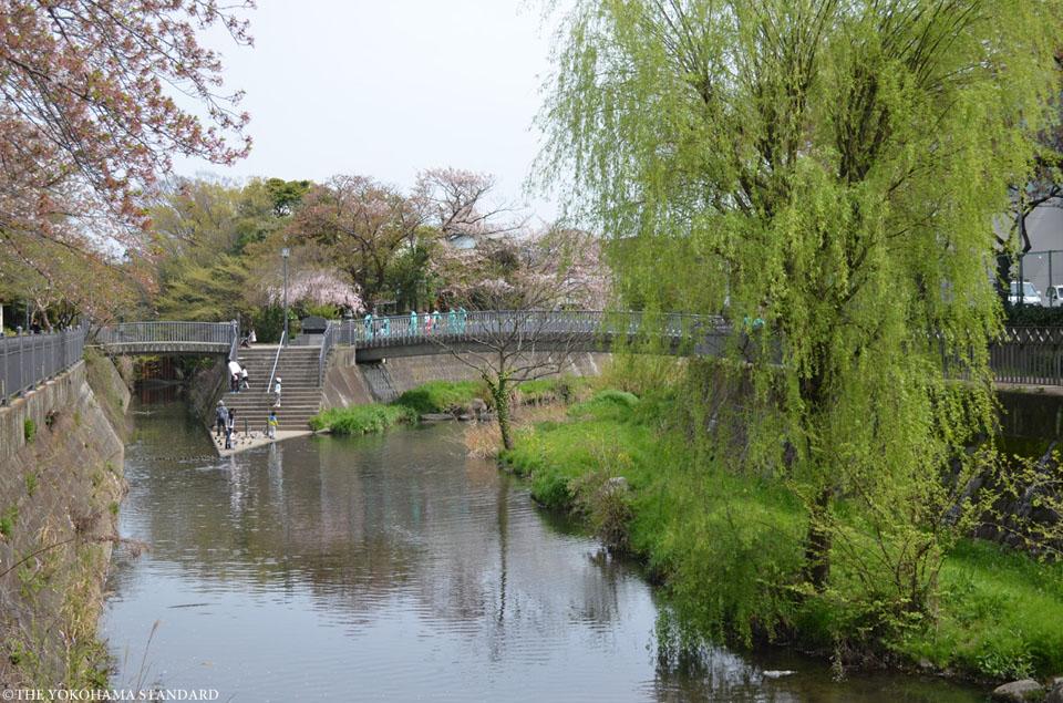 いたち川11-THE YOKOHAMA STANDARD