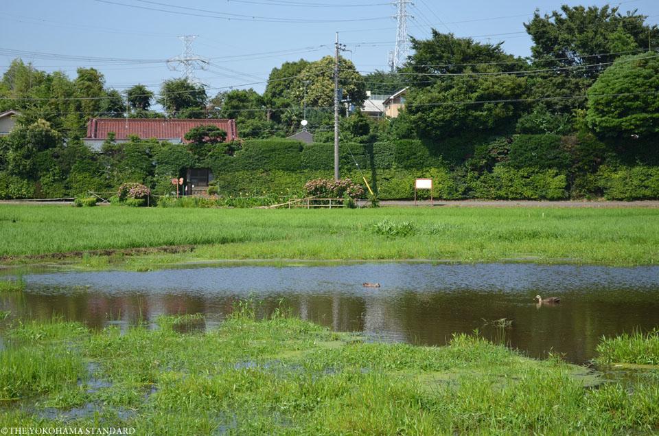 泉区上飯田町の田園風景-THE YOKOHAMA STANDARD