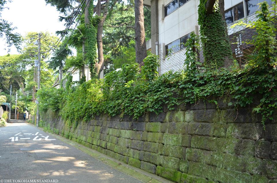 フェリスのタブノキ6-THE YOKOHAMA STANDARD