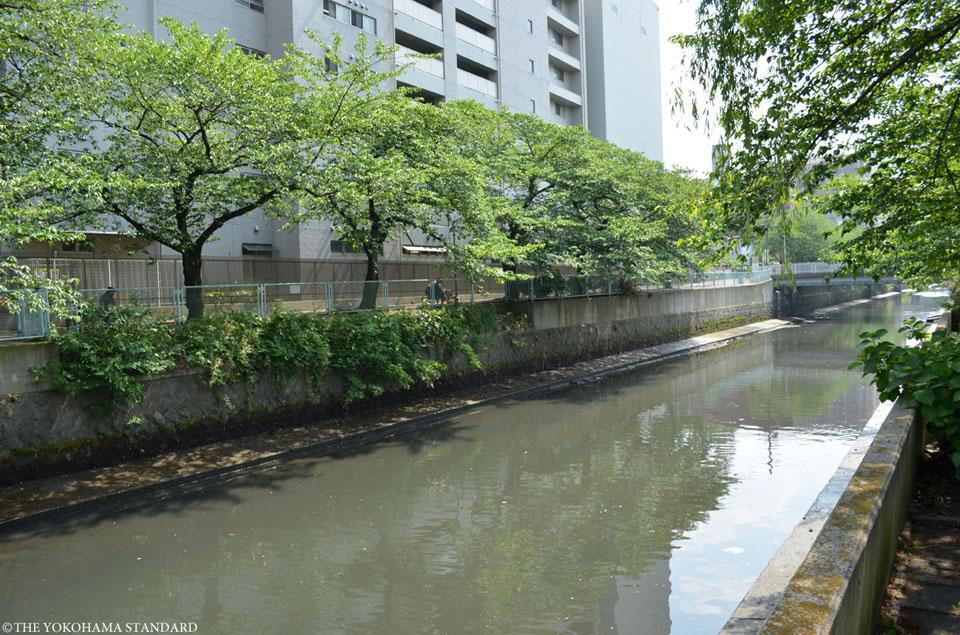石崎川 石崎橋付近1-THE YOKOHAMA STANDARD