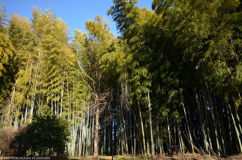 旧城寺3-THE YOKOHAMA STANDARD