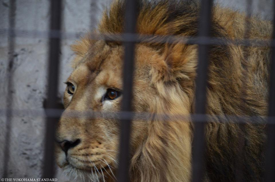野毛山動物園の動物たち6-THE YOKOHAMA STANDARD