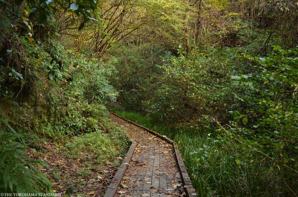 紅葉2015横浜自然観察の森11-THE YOKOHAMA STANDARD