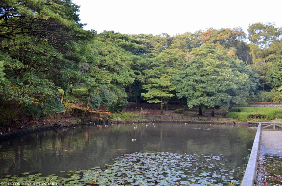 秋の根岸森林公園6-THE YOKOHAMA STANDARD
