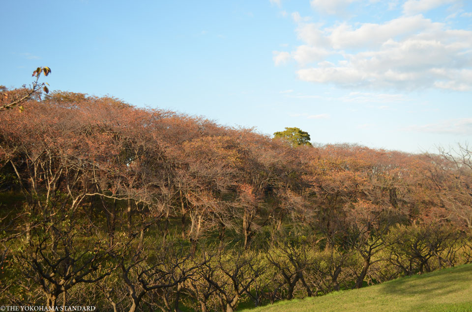 秋の根岸森林公園11-THE YOKOHAMA STANDARD