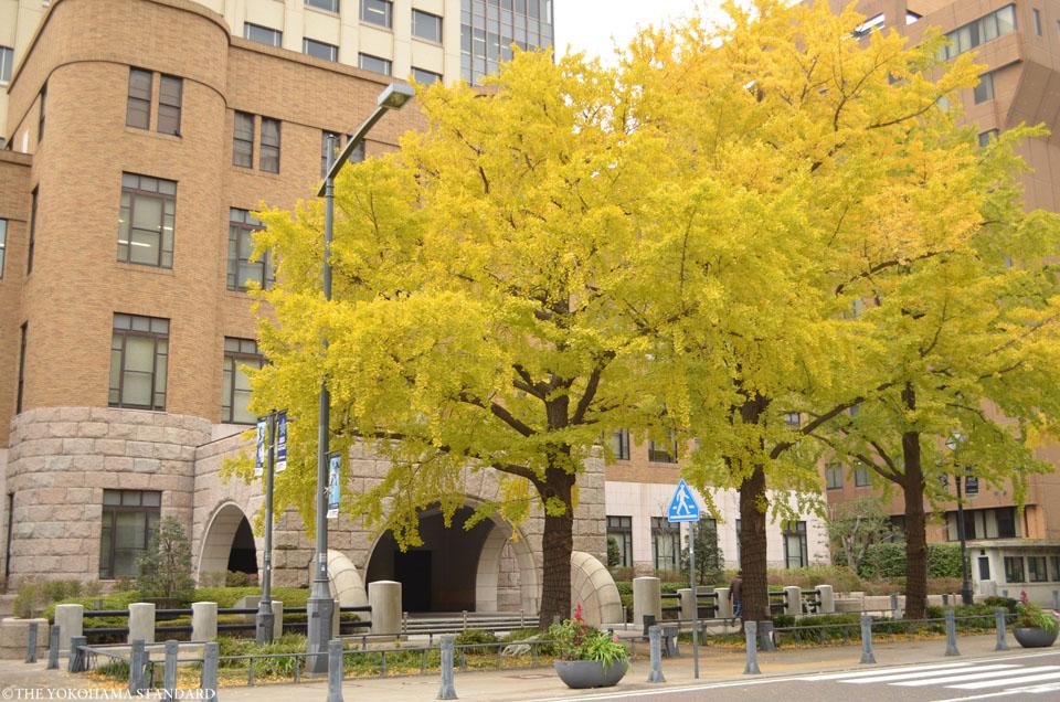 日本大通りの紅葉4-THE YOKOHAMA STANDARD