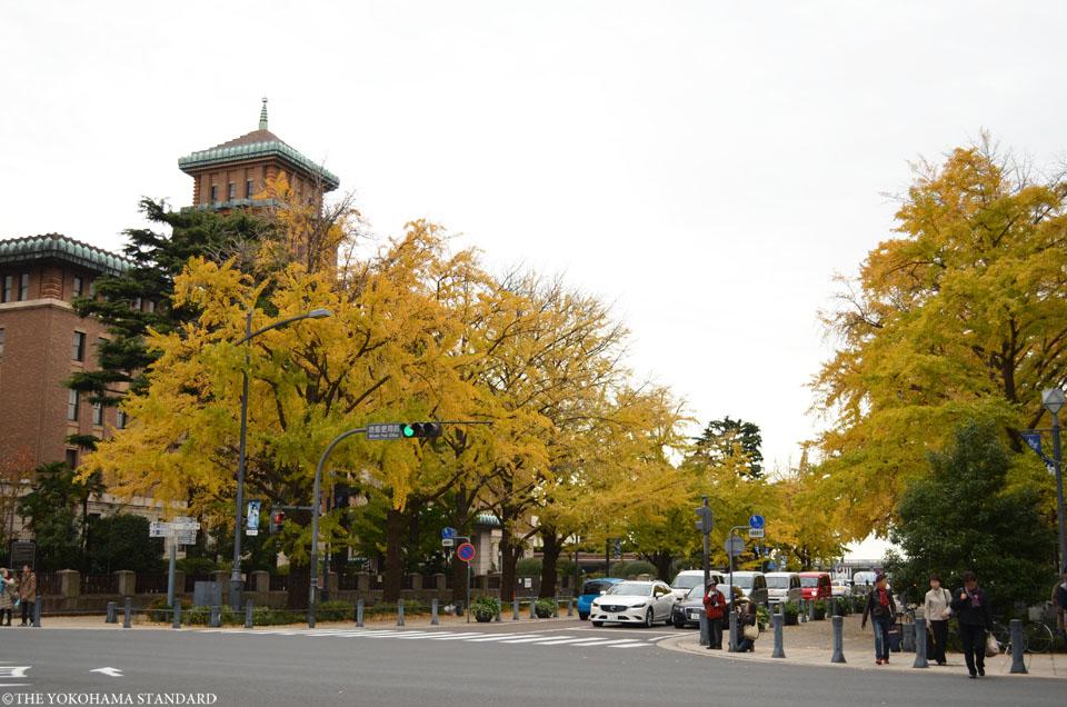 日本大通りの紅葉6-THE YOKOHAMA STANDARD