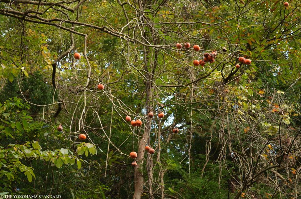 紅葉2015横浜自然観察の森8-THE YOKOHAMA STANDARD