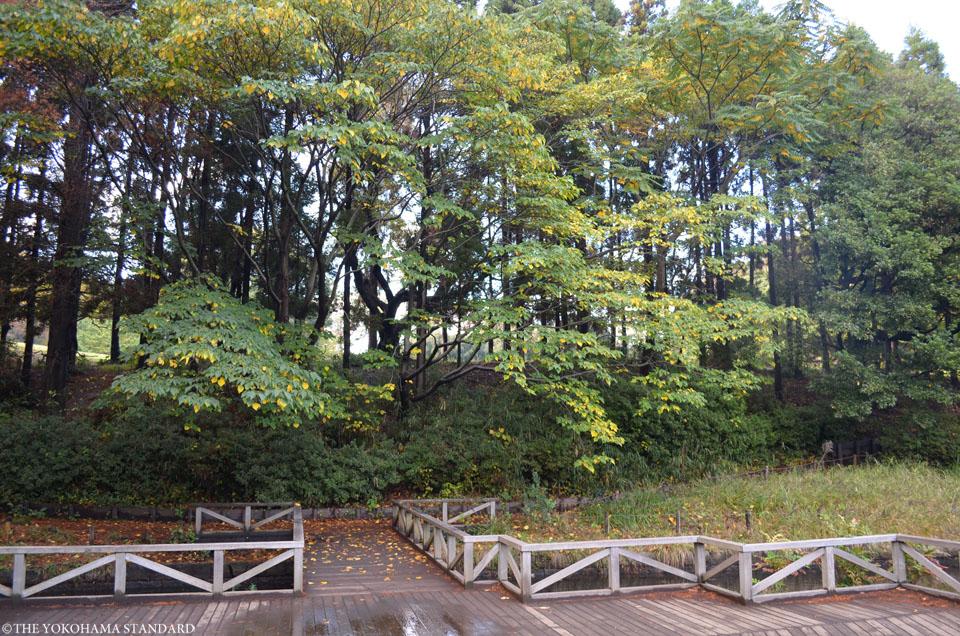 秋の根岸森林公園5-THE YOKOHAMA STANDARD
