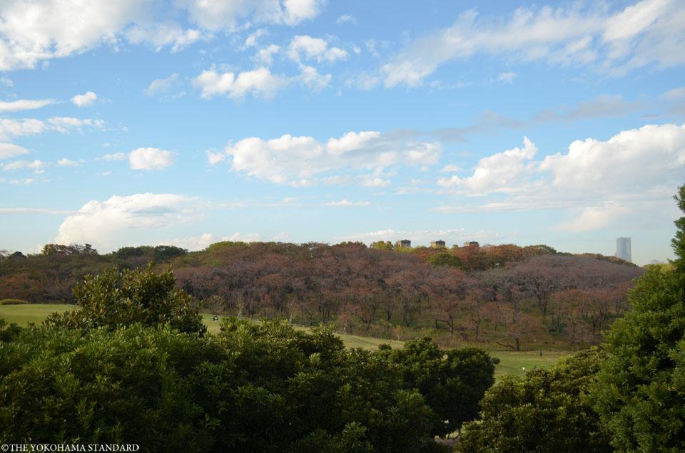 秋の根岸森林公園1-THE YOKOHAMA STANDARD