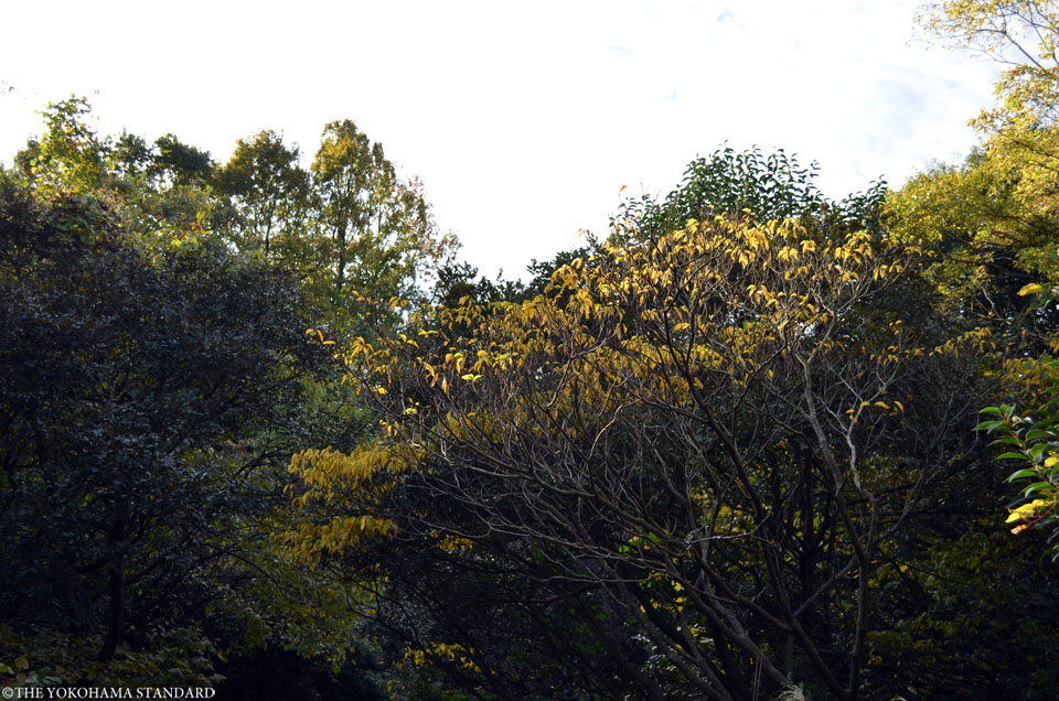 紅葉2015横浜自然観察の森3-THE YOKOHAMA STANDARD