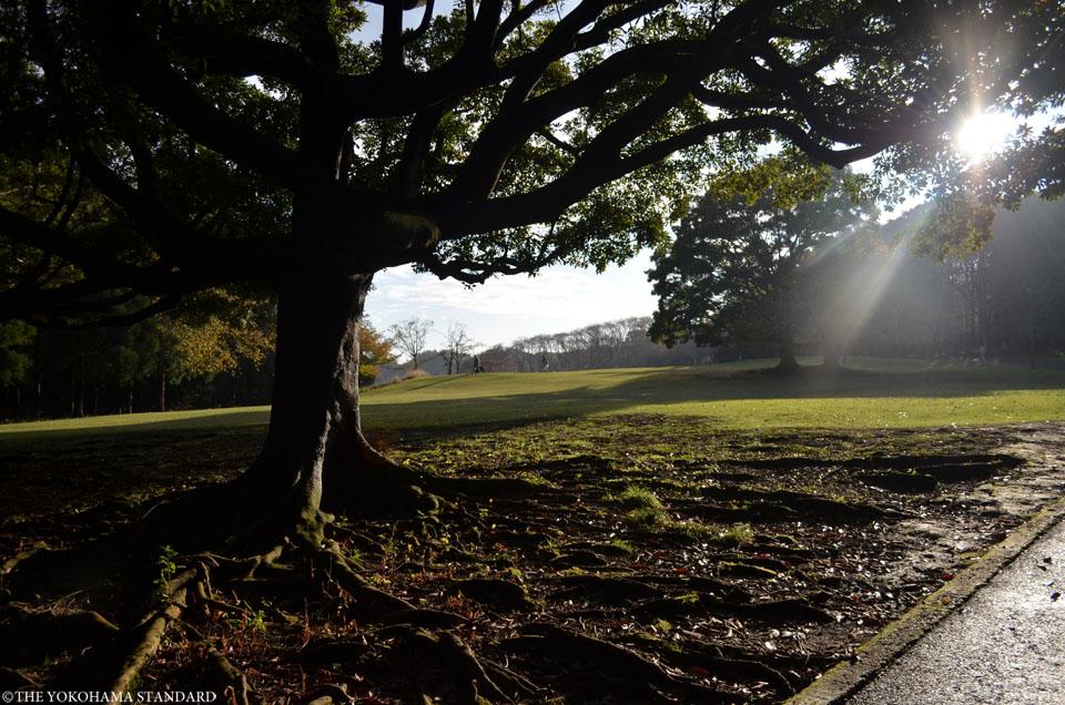 秋の根岸森林公園7-THE YOKOHAMA STANDARD