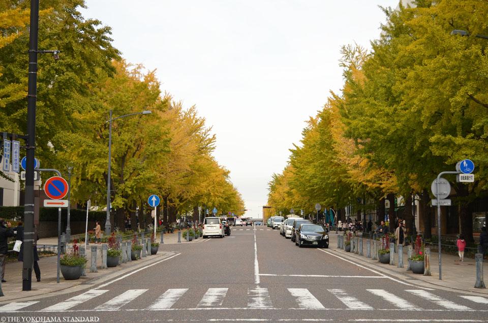 日本大通りの紅葉1-THE YOKOHAMA STANDARD