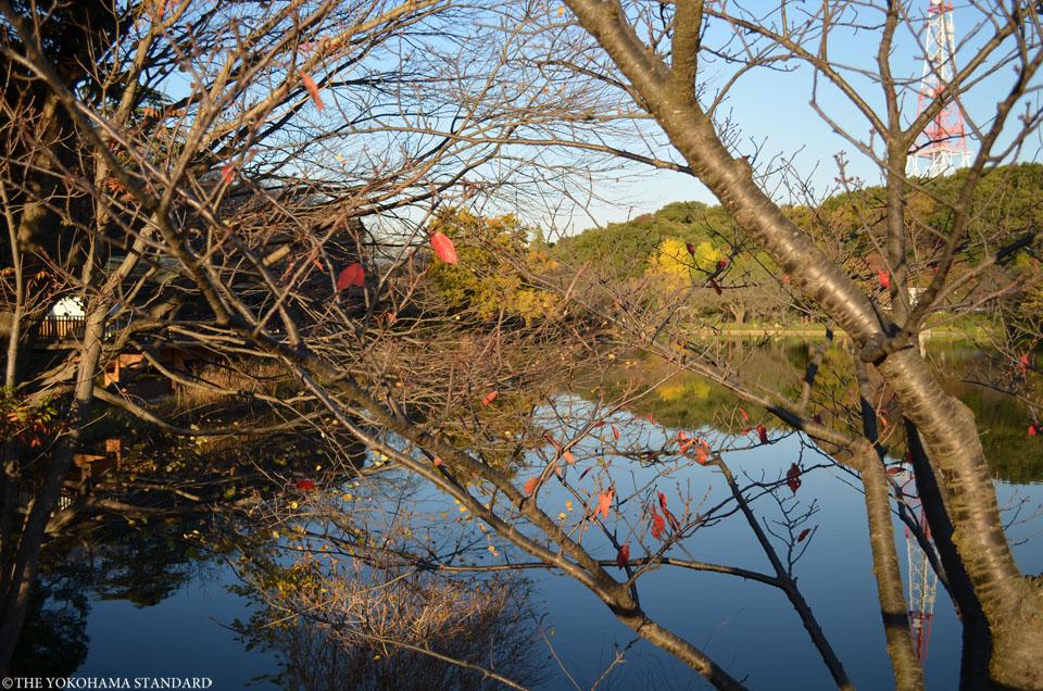 紅葉2015三ツ池公園3-THE YOKOHAMA STANDARD