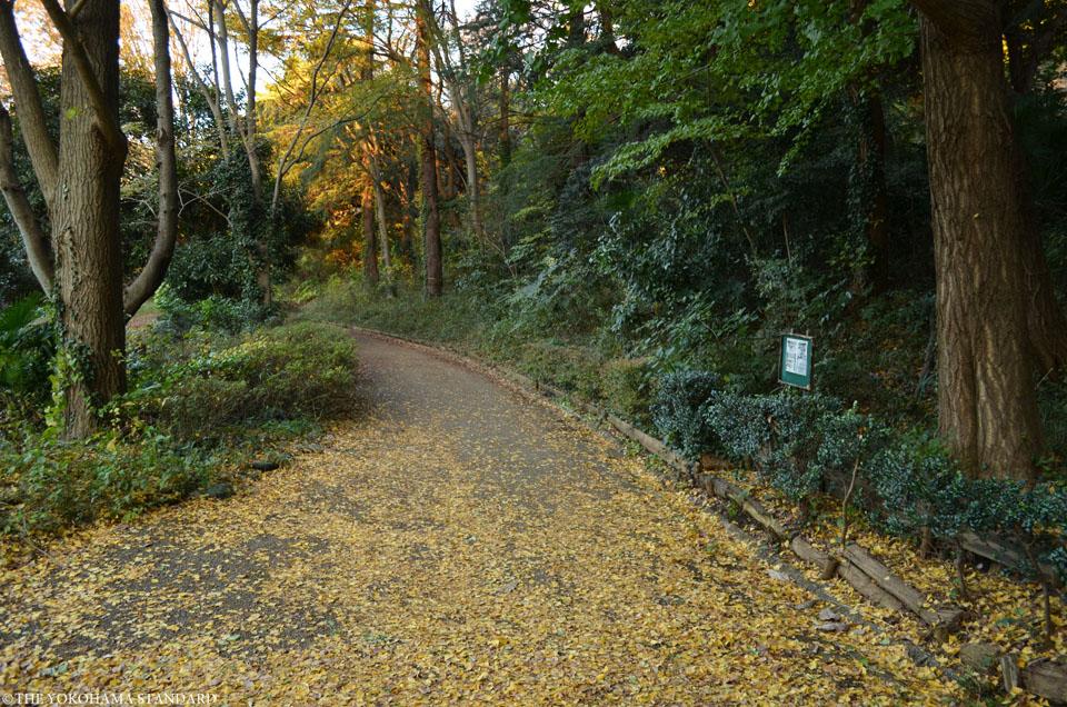 紅葉2015三ツ池公園8-THE YOKOHAMA STANDARD