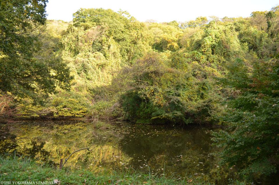 紅葉2015横浜自然観察の森5-THE YOKOHAMA STANDARD
