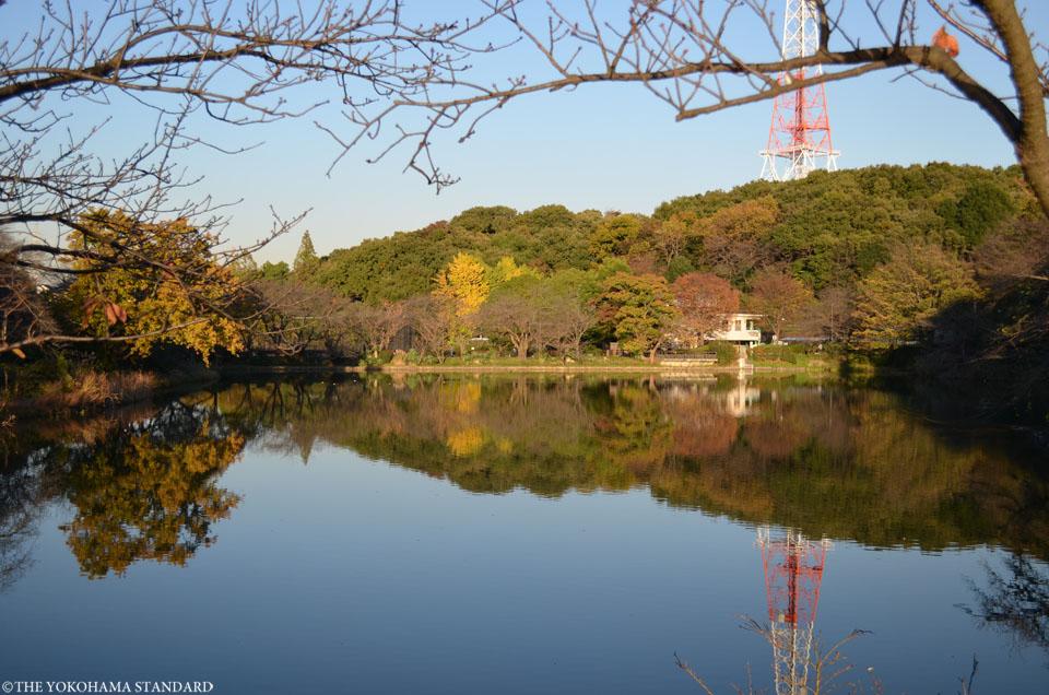 紅葉2015三ツ池公園1-THE YOKOHAMA STANDARD