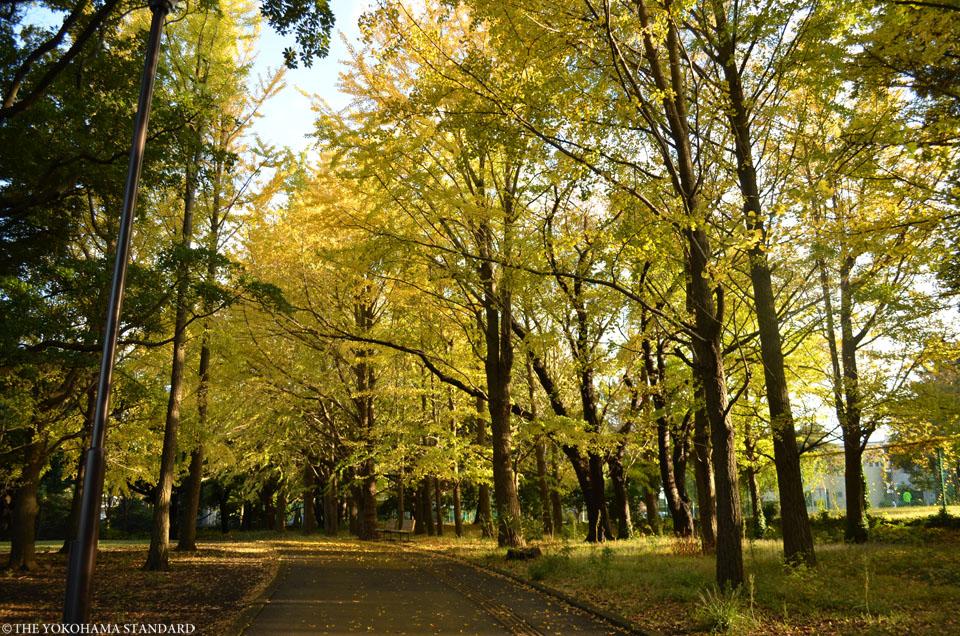 秋の根岸森林公園10-THE YOKOHAMA STANDARD