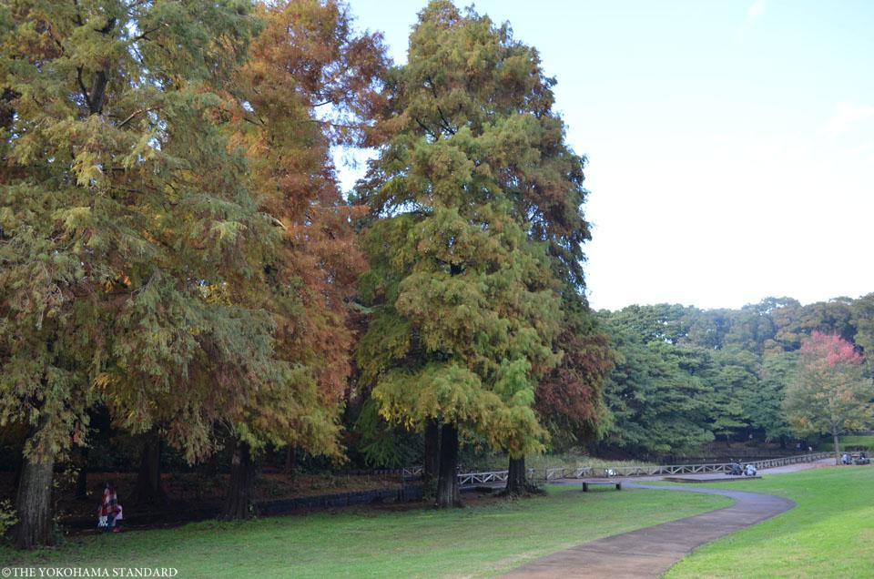 秋の根岸森林公園4-THE YOKOHAMA STANDARD