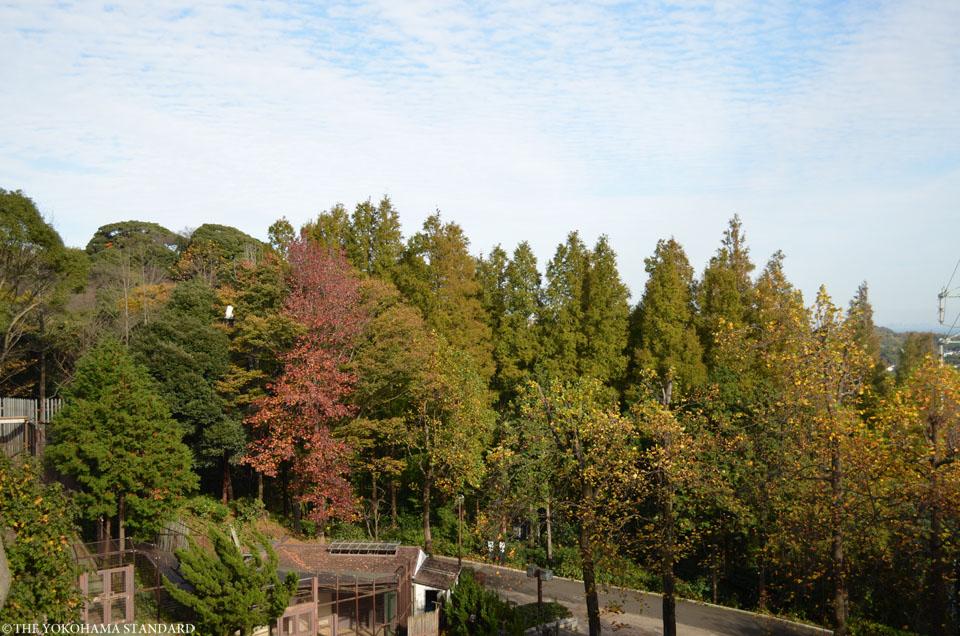 秋の金沢自然公園11-THE YOKOHAMA STANDARDブラフ