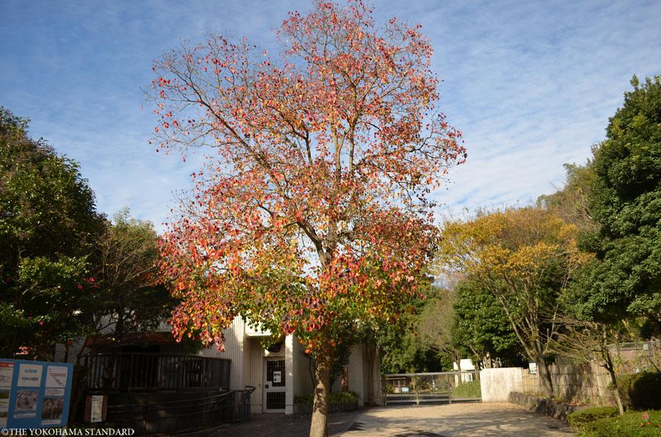 秋の金沢自然公園15-THE YOKOHAMA STANDARDブラフ
