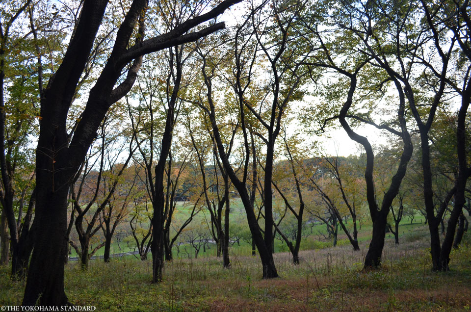 秋の根岸森林公園9-THE YOKOHAMA STANDARD
