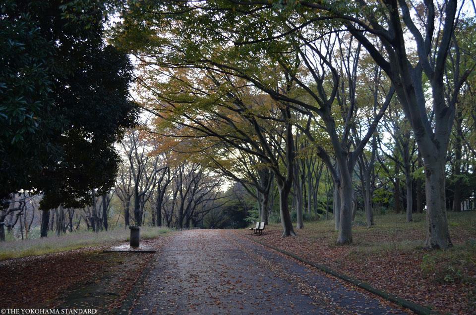 秋の根岸森林公園8-THE YOKOHAMA STANDARD